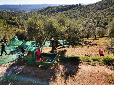 Olivenernte mit Tuktuk | Casa Ray Poggio Agliai